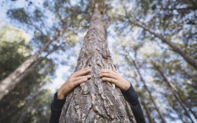 Protección de los bosques